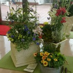 横浜高島屋 屋上にて寄植え体験講座&横浜山手生徒による寄植えの展示開催中