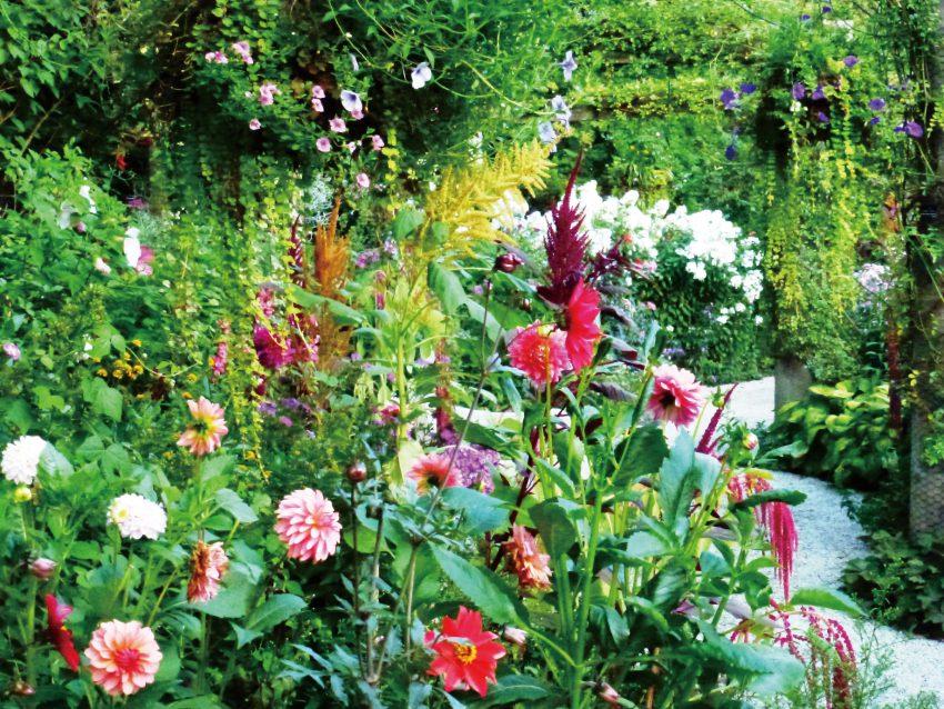 夏の鮮やか庭