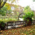 バラクラの紅葉とハロウィン 10月29日のガーデンの様子