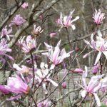 春の息吹~お庭からのプレゼント~