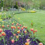 5月6日 チューリップのお庭