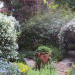 7月2日 お庭でご覧いただけるバラたち