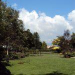 9月6日 秋晴れ 秋空 秋の庭