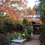 きらきら秋の光に輝くお庭です。