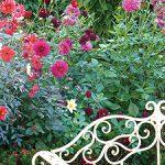 ダリアが輝く庭 オータムガーデンウィーク2014 レクチャーのご案内