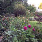 ダリアが輝く庭 オータムガーデンウィーク2014