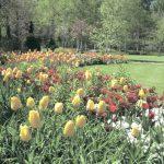 第3回  ガーデンプランツショー「いい植物を見つけよう!」