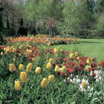 第4回ガーデンプランツショー「いい植物を見つけよう」