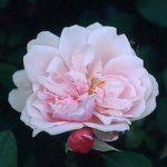 5月10日(日)は母の日!!お花あります!!