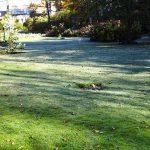 初霜でダリアのシーズンが終りに 10月26日(月)のガーデン