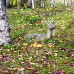 10月 31日 「バラクラ ハロウィン」