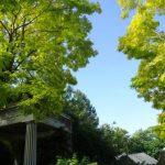 庭園だけじゃないバラクラの楽しみ。 併設するカフェ、ショップのご紹介。