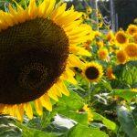 庭から秋を感じる 8月23日(日)   スティーブ・ターナーも帰国の途へ