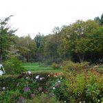 ダリアと紅葉で美しい10月のガーデン