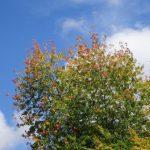 10月16日のガーデン。紅葉が見ごろとなってきました。