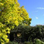 『バラクラ カフェ』 2015 秋の味覚 & メニュー
