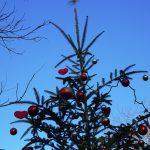 11月22日(土) 3連休初日はとても穏やかな小春日和でした。
