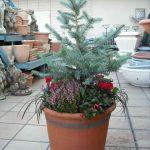 【受付中】11月19日(木)お庭のお悩み解決「ケーススタディー」&「クリスマスの寄植え」