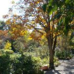 地元・諏訪地方6市町村にお住まいの方、11月2日(土)~4日(月)の3日間 晩秋のお庭にご招待!