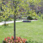 4月30日チューリップが咲きました。