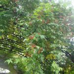 〜10月後半〜 【紅葉が美しい】お庭の様子