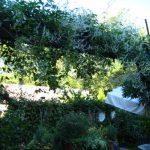 ダリアはこれからもどんどん様々な種類が開花をして10月に向けて満開になってなっていきます。