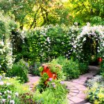 29日のバラの様子 + グリン・ジョンズ氏によるセミナーの模様