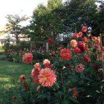 10月12日(日)のお庭の様子