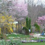 フリチラリアやチューリップなどが咲き始め、まさにタペストリーの様に!(ケイ山田撮影)