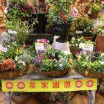 蓼科ガーデンセンター 年末謝恩SALE!&初売り