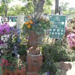 寄植えの芸術展 西野教室&長谷川教室『特別出展』のご紹介