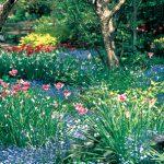 色鮮やかな球根植物の競演 〜 Spring Highlight