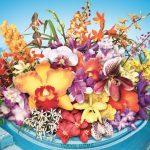 蘭が彩る楽園へ 世界らん展21日&22日 イベント案内