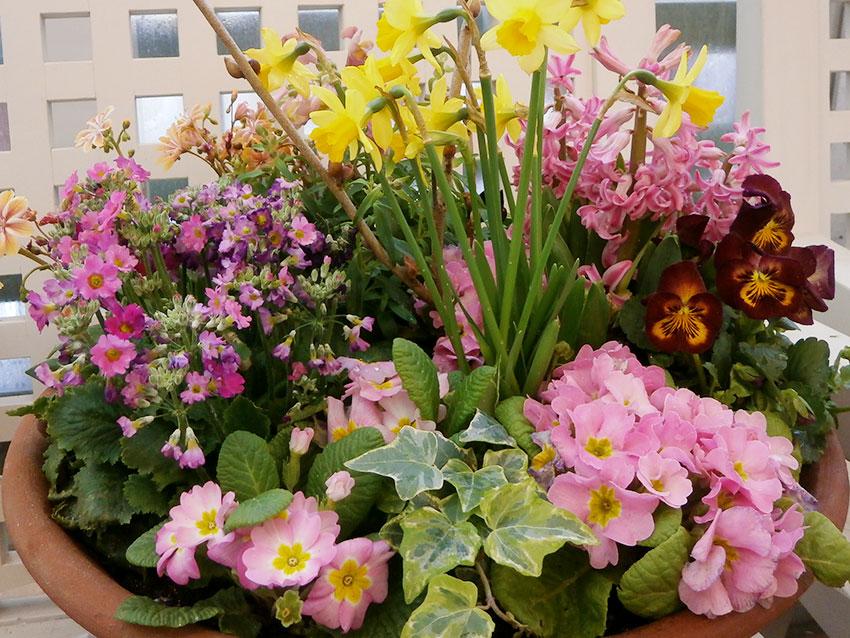寄せ植えに使う植物の選び方 2