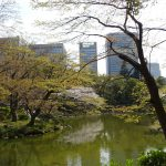 日比谷公園の桜は満開! バラクラのイベント開催中です!