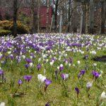 春爛漫の長野県民入園フリーデー 4月14日(金)~17日(月)