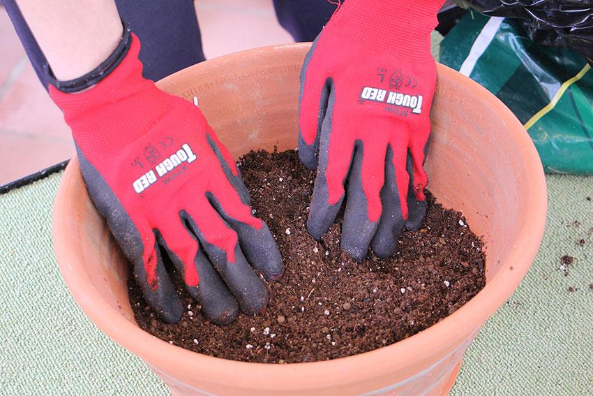 寄せ植えの基本2 土を入れる