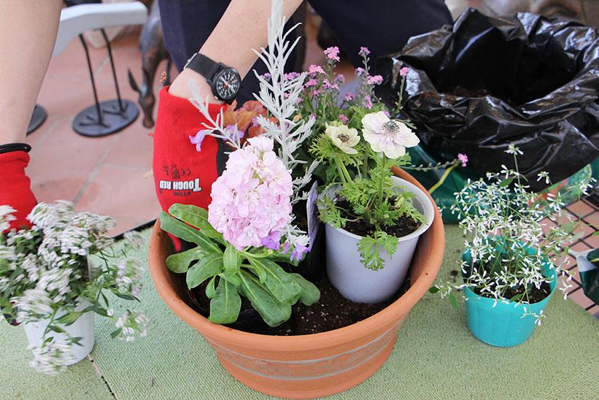 寄植えの基本1 苗と鉢のバランスを見る