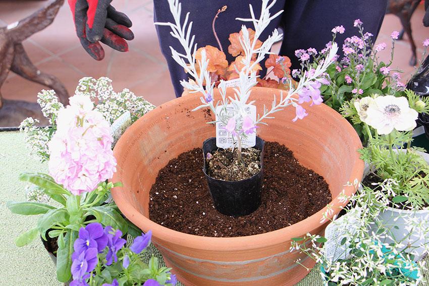 寄せ植えの基本3 表土の高さを揃える