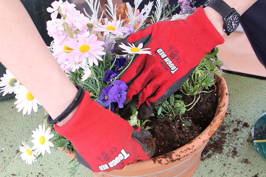 寄植えの基本5 苗の間に土を入れる