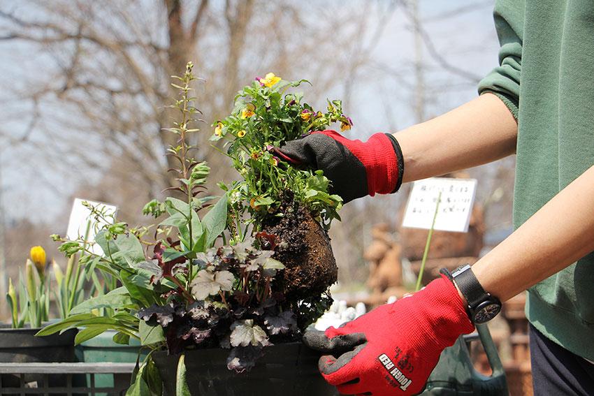 寄植えのメンテナンス4 花後の植物
