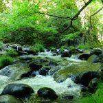 新緑から深緑の蓼科高原  とっておきのヒーリングスポットをご紹介!