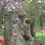 小鳥がさえずる蓼科バラクラ 球根花の響演 5月6日のガーデンの様子