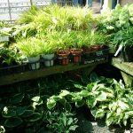 蓼科バラクラ ガーデンセンターに豊富な植物入荷!