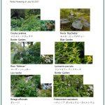 2017/07/07 Head Gardener's Report