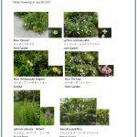 2017/07/09 Head Gardener's Report