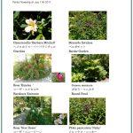2017/07/11 Head Gardener's Report