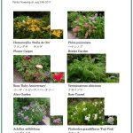 2017/07/24 Head Gardener's Report
