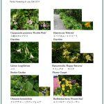 2017/07/25 Head Gardener's Report