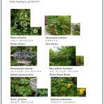 2017/07/26 Head Gardener's Report